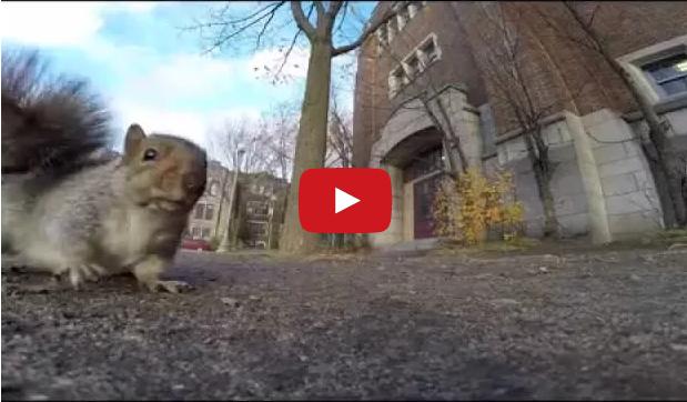 Squirrel Steals GoPro Video