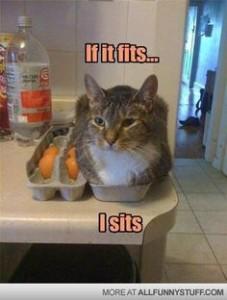Cat Meme 11