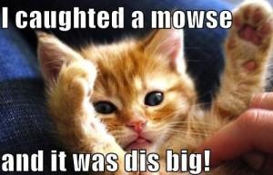 Cat Meme 12