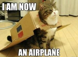 Cat Meme 2