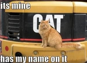 Cat Meme 8