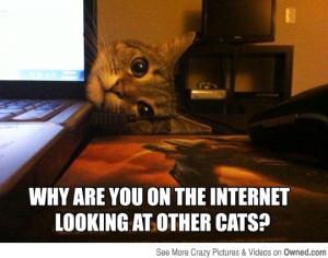 Cat Meme 9