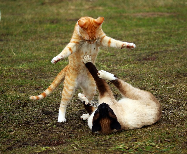 cats playing