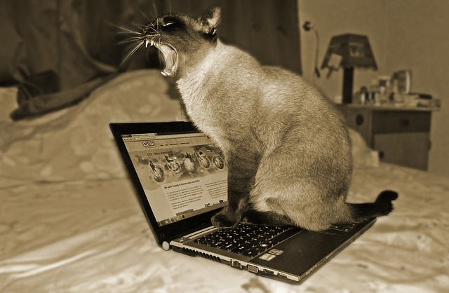 cat yawning on top of a laptop
