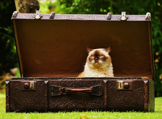cat on luggage